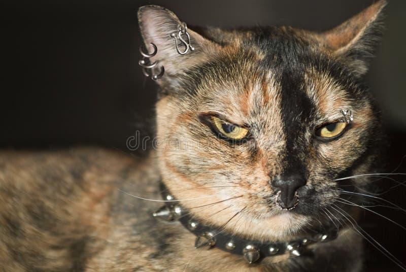 punk kota obrazy royalty free