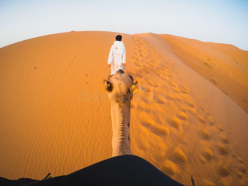 Punkt av sikten p? kamel i efterr?tt royaltyfri bild