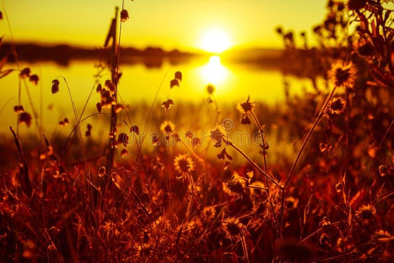 Punktu Reyes zatoka zasadza kwiatu słońca jeziora zatoki ustalonego odbicia wysokiego kontrast obraz royalty free