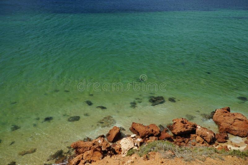 Punktwasser der springenden Fische stockbilder