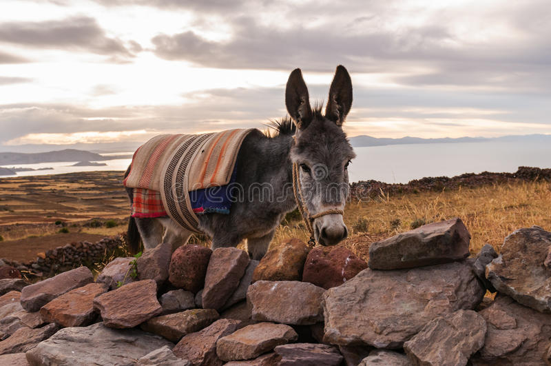 Puno, lago Titicaca fotografía de archivo libre de regalías