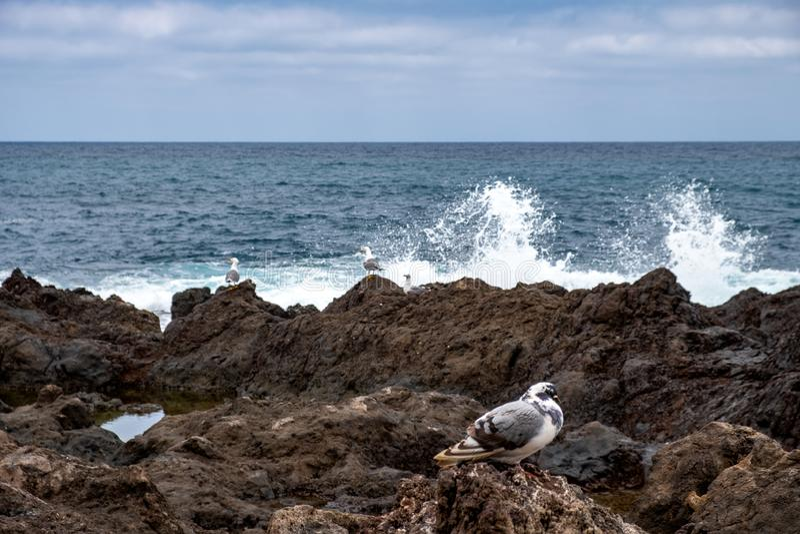 2019-03-12 Punta Brava - Puerto de la Cruz, Santa Cruz de Tenerife lilla staden på den atlantiska kusten royaltyfri foto