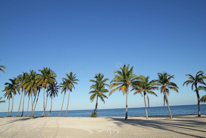 Punta cana royalty free stock photo