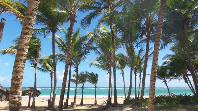Punta Cana stockfoto