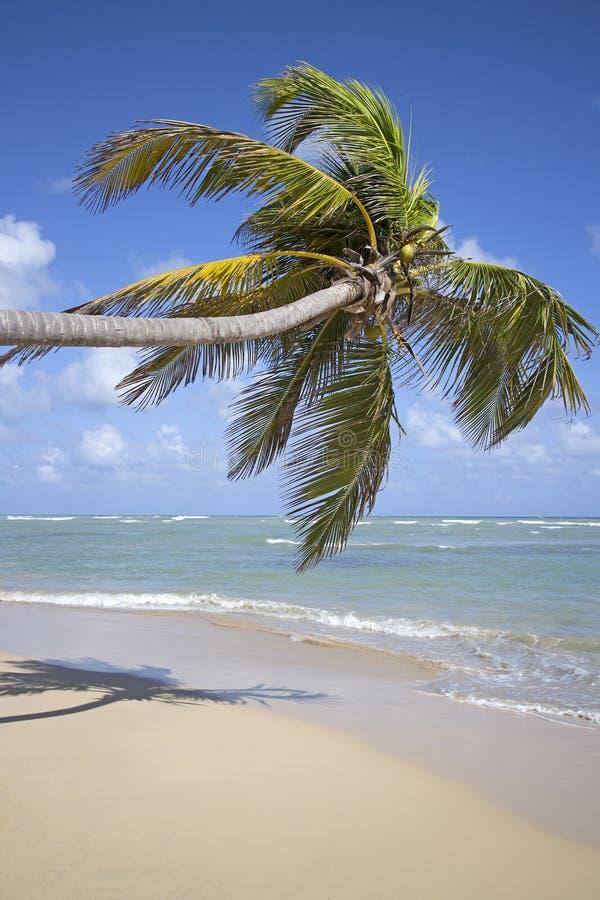 Punta cana beach royalty free stock photo