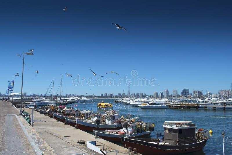Punta del Este Cais imagem de stock