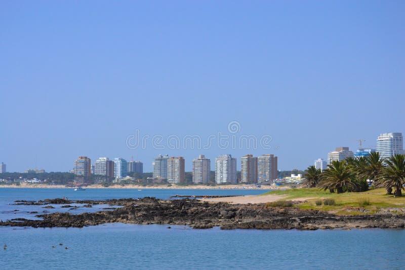 Punta del Este Louro fotos de stock