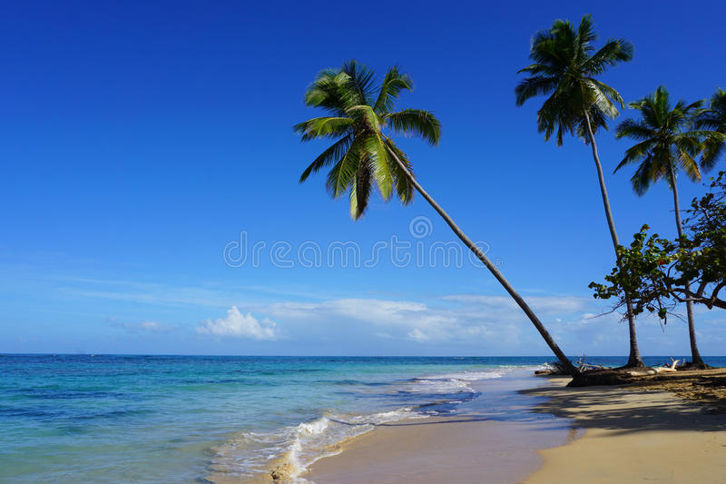 The Punta Popy beach, Las Terrenas stock image