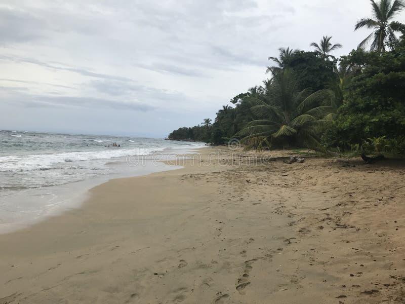 Punta Uva Costa Rica imagem de stock royalty free
