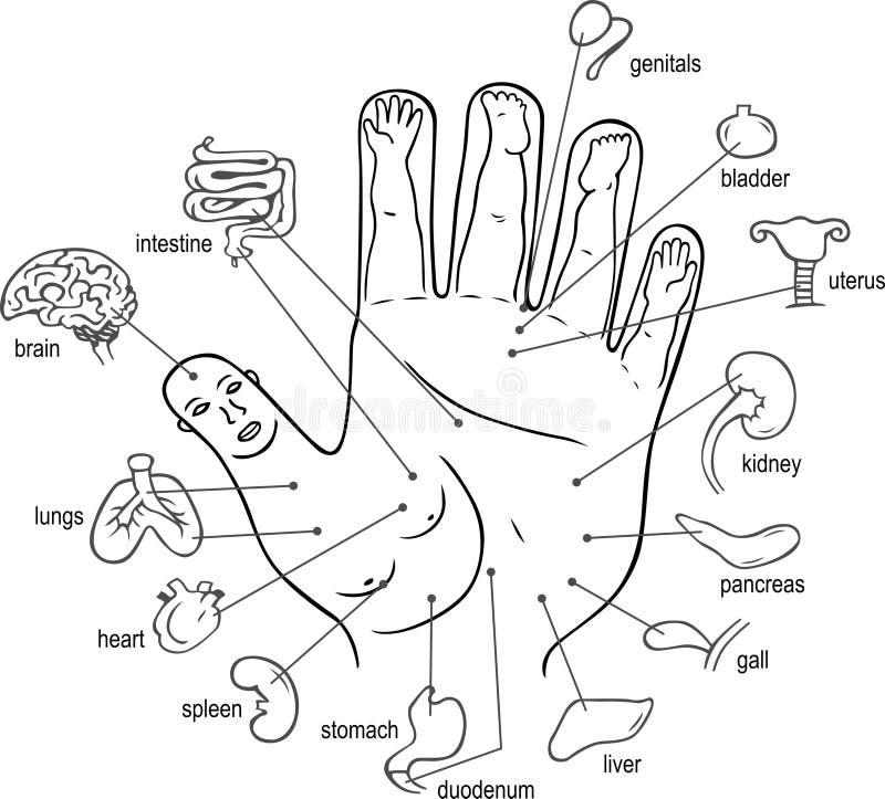 Puntas de la acupuntura en la palma stock de ilustración