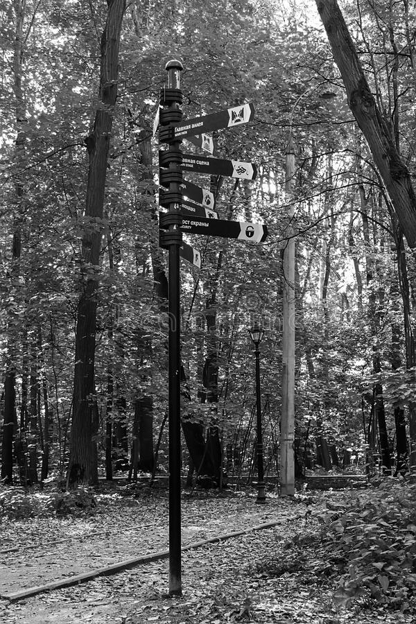 Puntatore sui precedenti degli alberi di betulla in parco fotografie stock libere da diritti