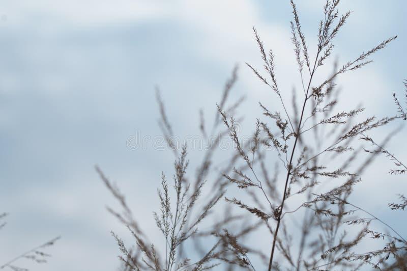 Punte di erba su sfondo naturale fotografie stock libere da diritti
