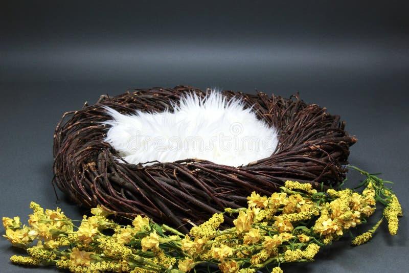 Puntello della foto del fondo di fantasia del nido dell'uccello isolato su gray fotografie stock