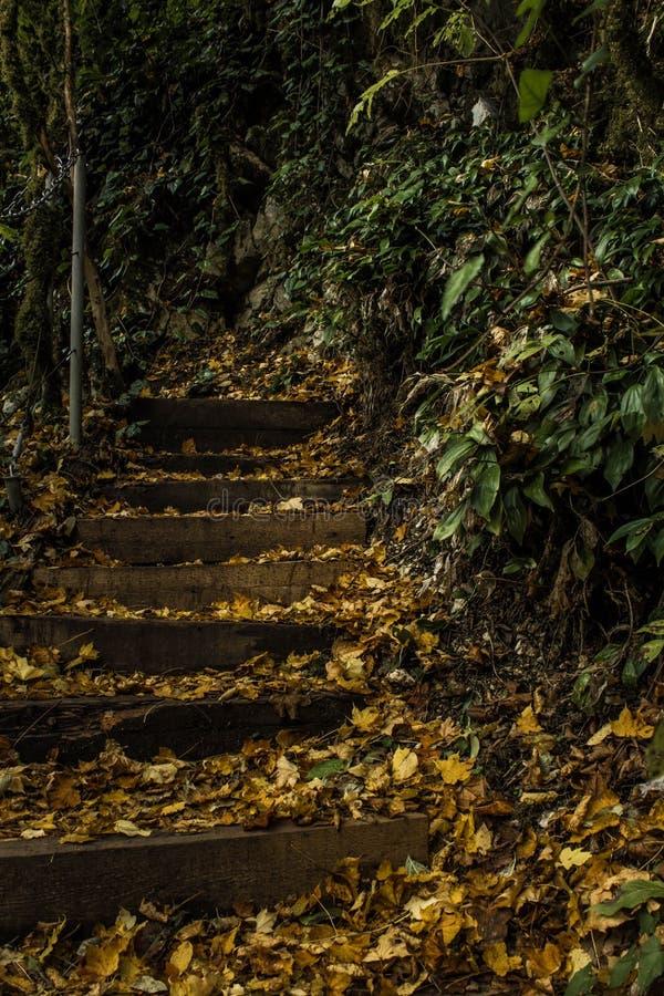 Punti nella foresta del legno di bosso in Soci immagine stock libera da diritti