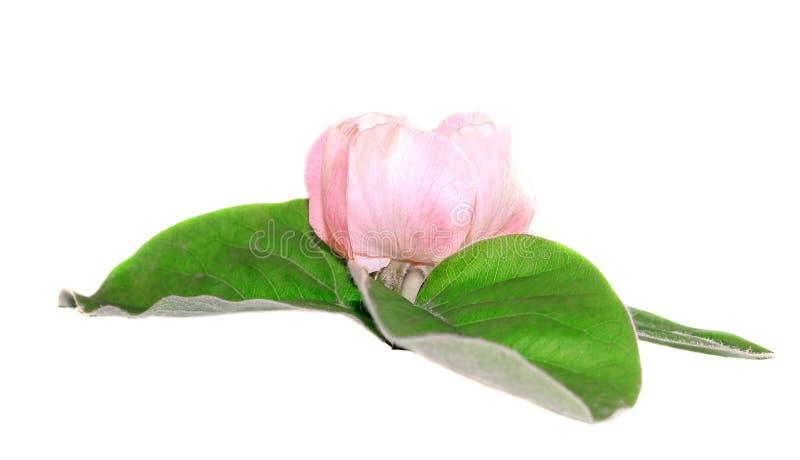 Puntilla con la flor imagenes de archivo