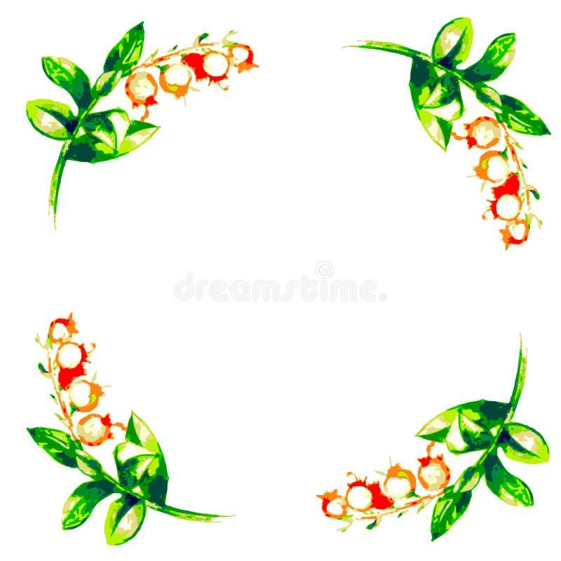 Puntilla de bayas y de flores ilustración del vector
