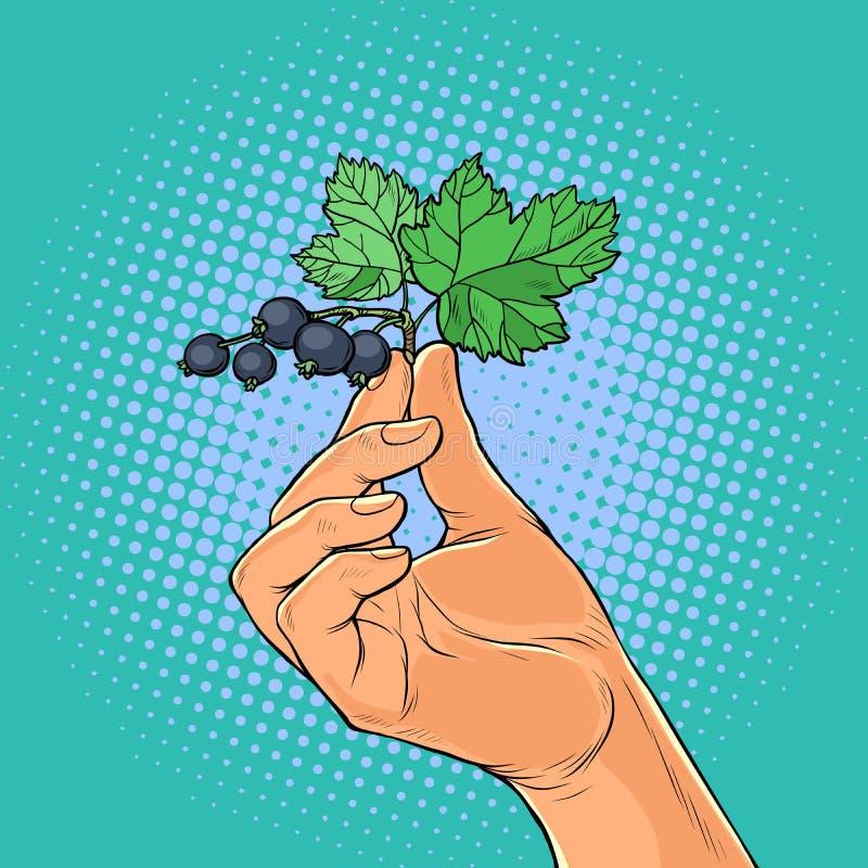 Puntilla de la grosella negra en las manos ilustración del vector