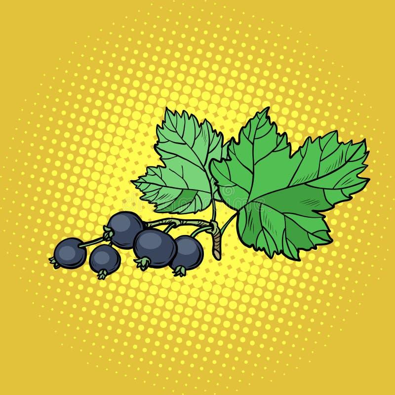 Puntilla de la grosella negra ilustración del vector