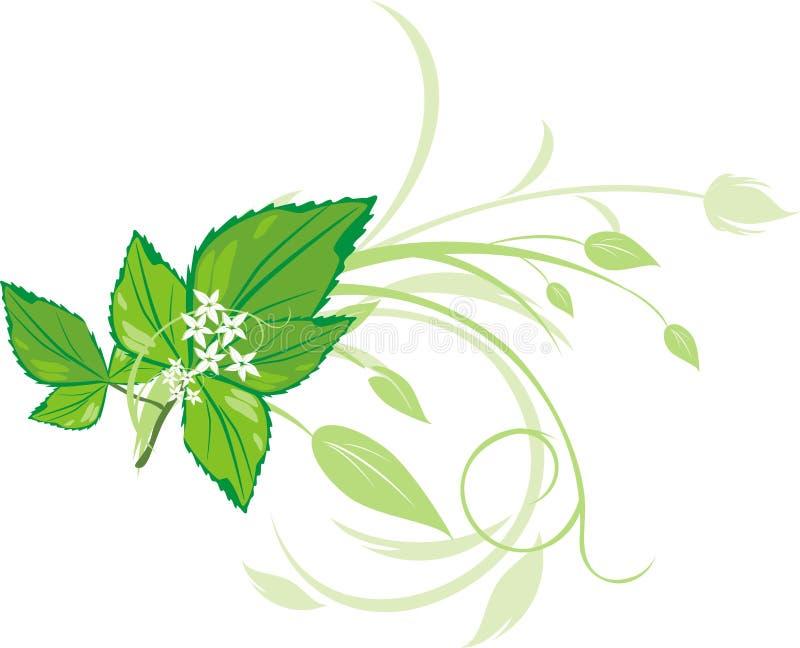 Puntilla de la menta con el ornamento floral ilustración del vector