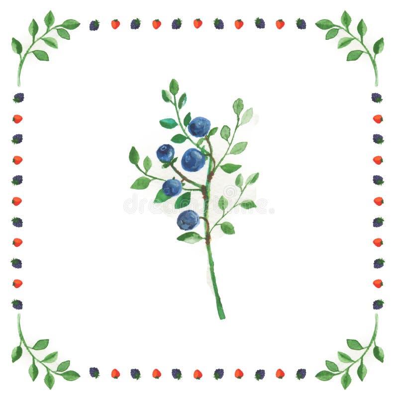 Puntilla de los arándanos aislados en el fondo blanco en marco de la baya imagen de archivo libre de regalías