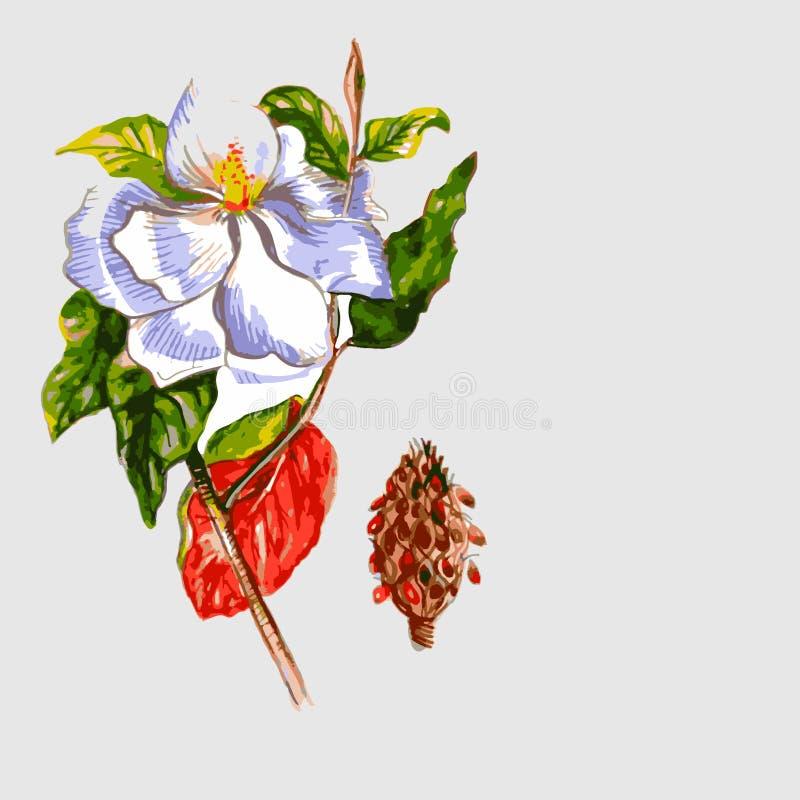 Puntilla del acacia de florecimiento stock de ilustración