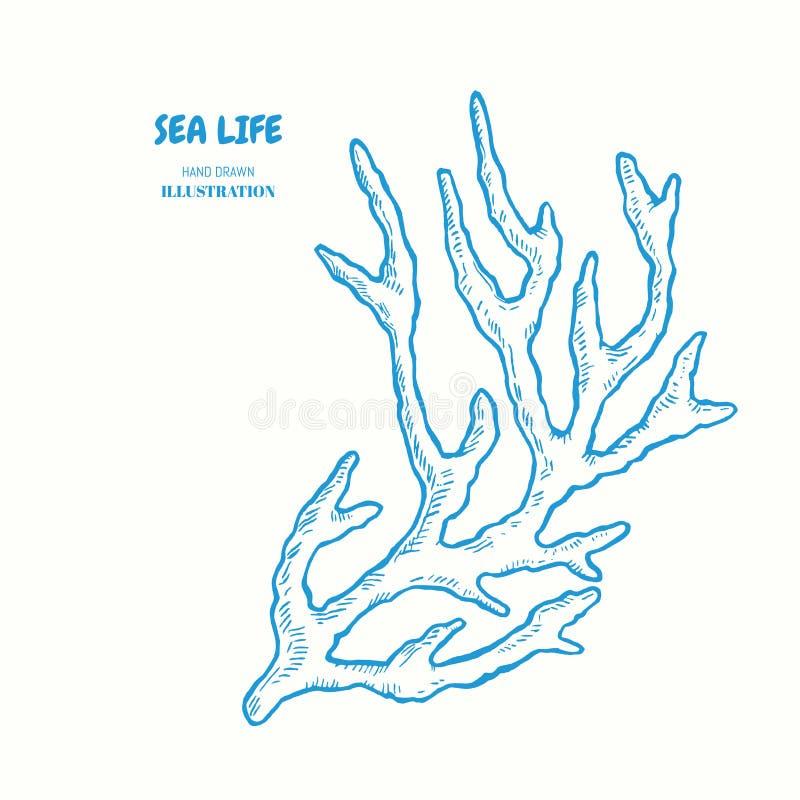 Puntilla del coral ilustración del vector