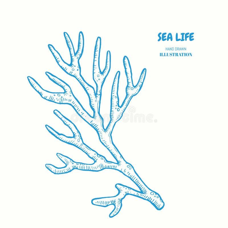 Puntilla del coral stock de ilustración