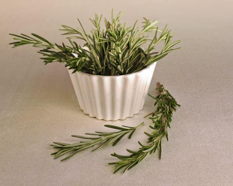 Puntillas frescas de Rosemary en un tazón de fuente. imagen de archivo libre de regalías