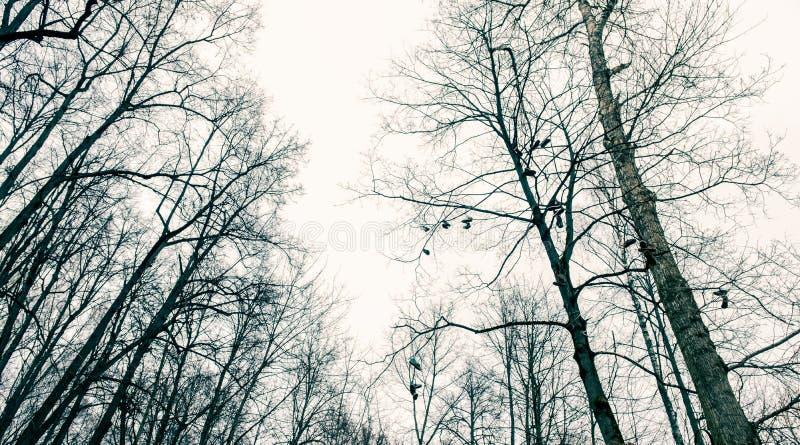 Punto in bianco e nero della foresta fotografie stock