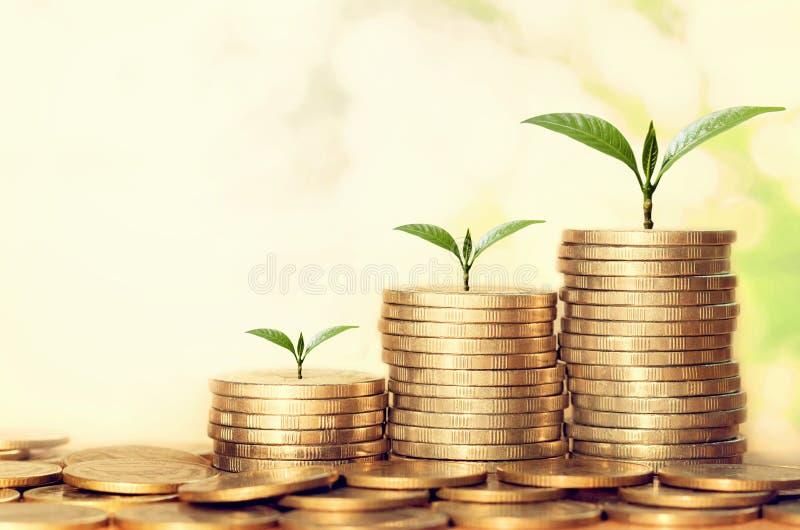 punto crescente della pianta della pila dei soldi con sole finanza di concetto fotografia stock libera da diritti