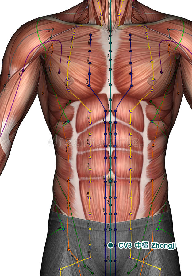 Punto CV3 Zhongji, di agopuntura illustrazione 3D immagine stock libera da diritti