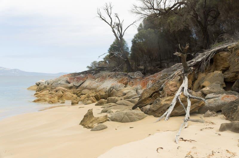 Punto de los pantalones, isla del Flinders, Tasmania, Australia imagenes de archivo