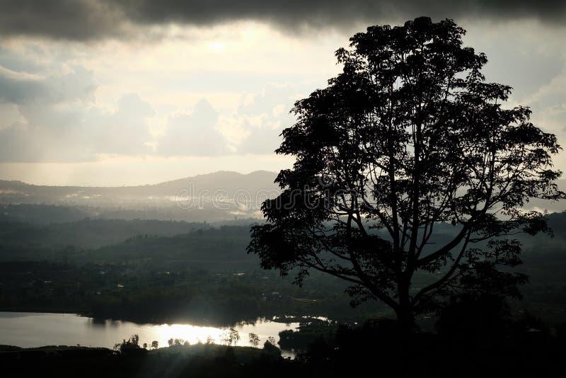 Punto de opinión de KhaoKho [solamente árbol] imagen de archivo