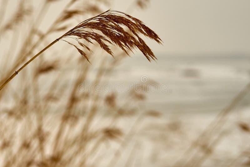 Punto de plantas secas con una playa cubierta con hielo foto de archivo libre de regalías