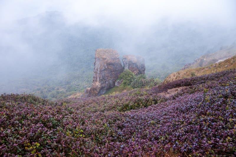 Punto de visión en Kew Mae Pan Nature Trail, parque nacional de Doi Inthanon, foto de archivo libre de regalías