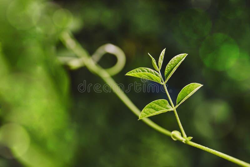 Punto di luce solare sulle foglie verdi con il bello fondo del bokeh, primo piano immagine stock