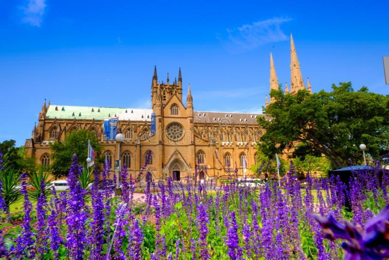 Punto di riferimento di Sydney Australia alla cattedrale del ` s di St Andrew da Hyde Par fotografia stock