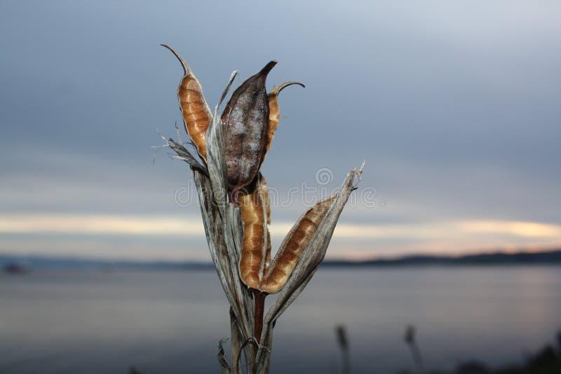 Punto di Saxe, Victoria, BC fotografie stock libere da diritti