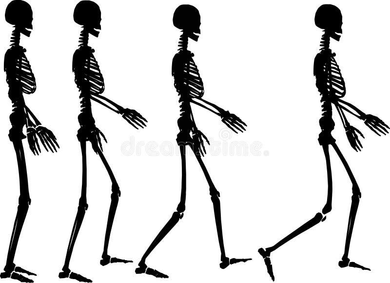 Download Punto di scheletro illustrazione di stock. Illustrazione di cassa - 3876218
