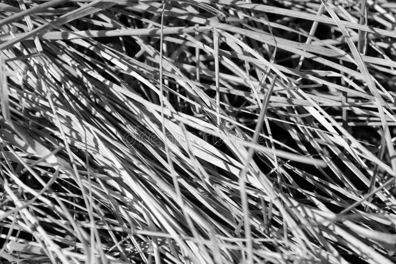 Punto di vista alto vicino di erba asciutta Sfondo naturale in bianco e nero immagini stock libere da diritti