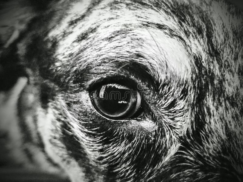Punto di vista del cane immagine stock libera da diritti