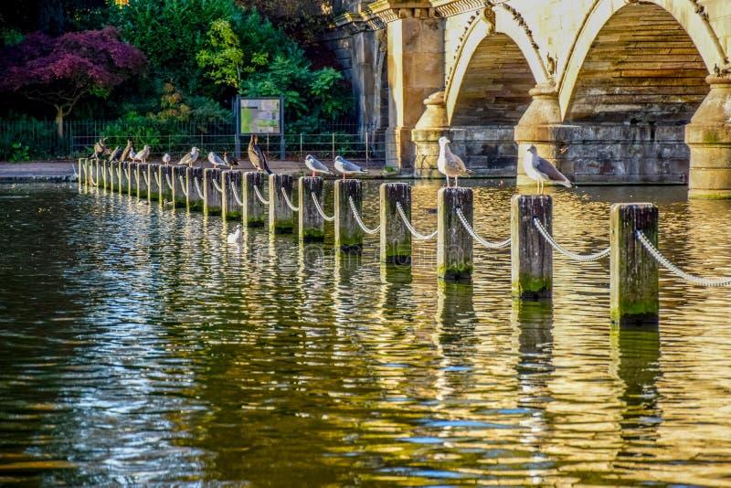 Punto di vista del paesaggio di Serpentine Lake e di Serpentine Bridge in Hyde Park, Londra, Regno Unito fotografie stock libere da diritti