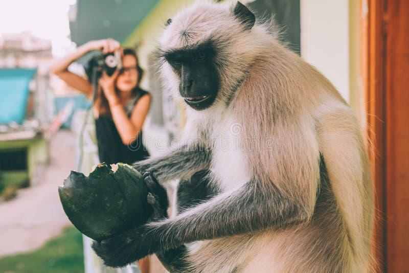 punto di vista del primo piano della scimmia divertente che tiene frutta e ragazza verdi immagine stock