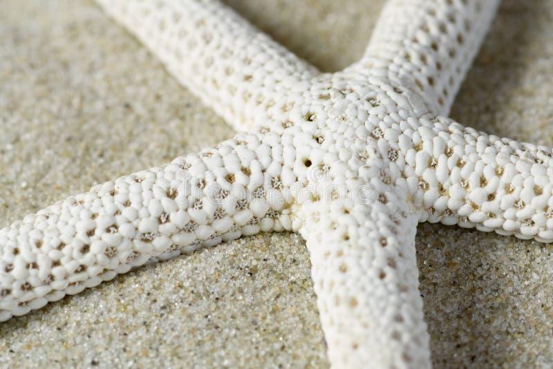 Punto di vista del primo piano di una stella marina fotografie stock libere da diritti