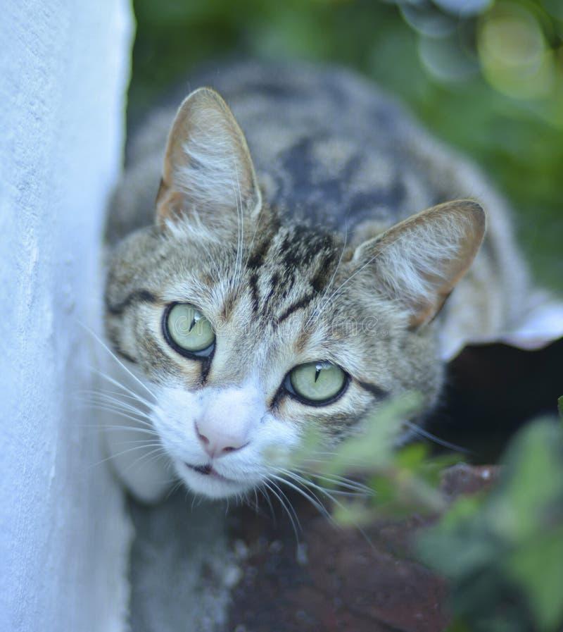 punto di vista del primo piano di un gatto fotografia stock