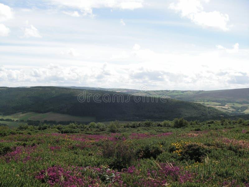 Punto di vista dell'erica di Exmoor Somerset Regno Unito immagine stock libera da diritti