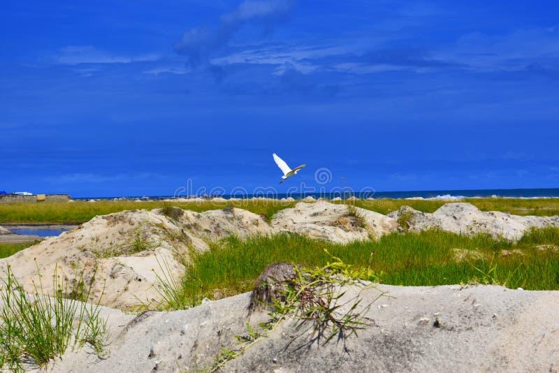 Punto di vista dell'uccello fotografia stock libera da diritti