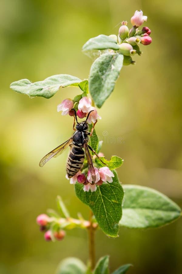 Punto di vista della natura di una vespa che esplora il giardino immagini stock