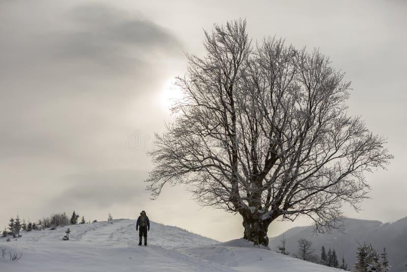 Punto di vista della viandante turistica con la condizione dello zaino nella neve profonda pulita bianca al grande albero su fond immagini stock
