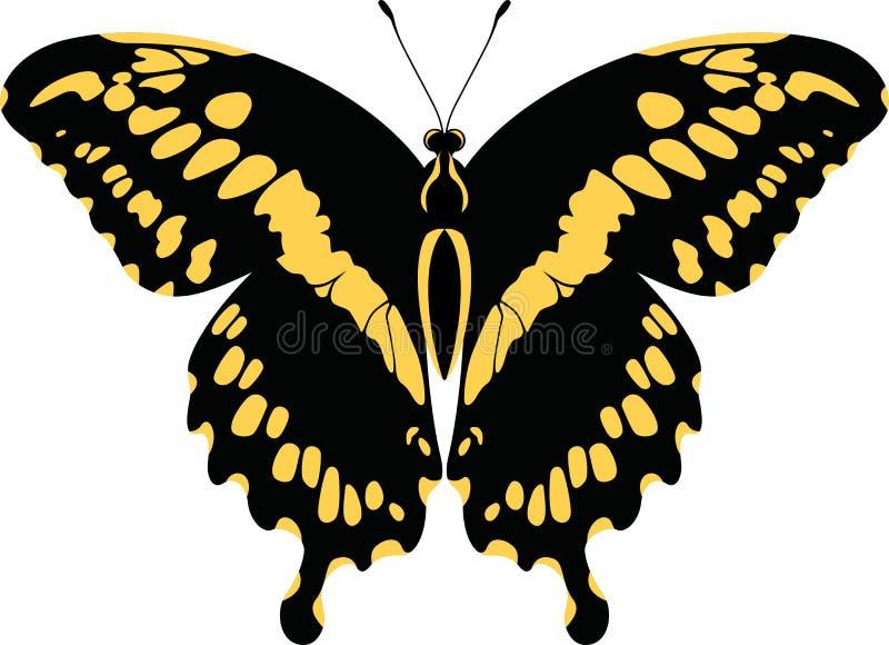 Punto di vista dorsale della farfalla gigante Papilio Cresphontes di coda di rondine di vettore illustrazione di stock